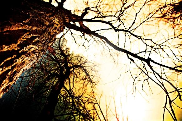 michigan-nature018